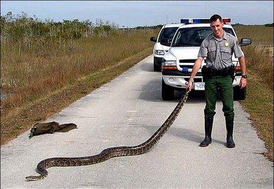 python abuse